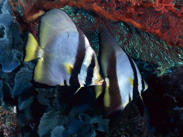 Големият-бариерен-риф-14