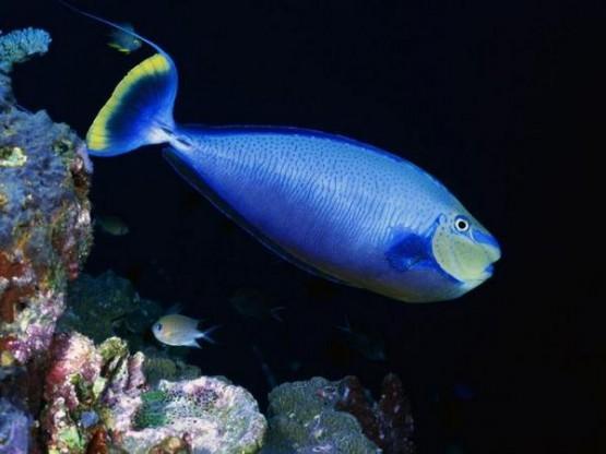 Екзотични риби