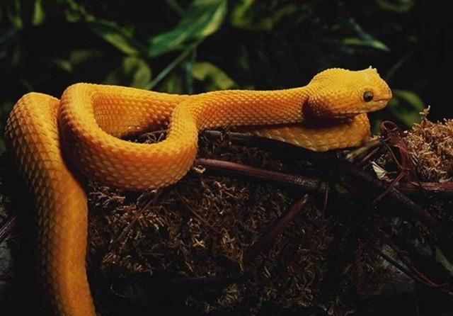 Snake In Rainforest