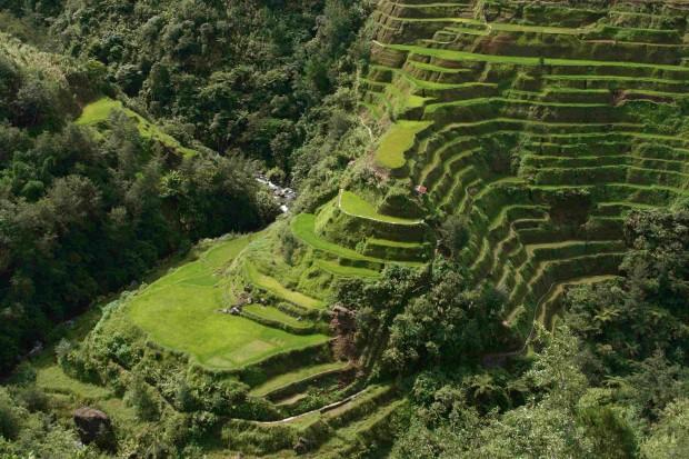 Оризовите тераси в Банауе