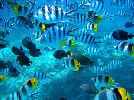 Около острова има най - различни риби
