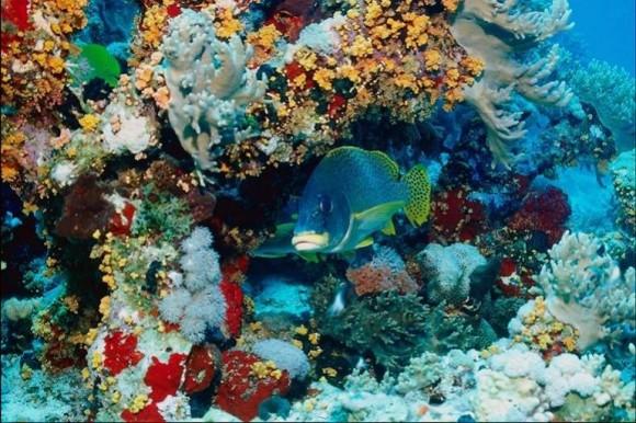 Екзотична морска риба
