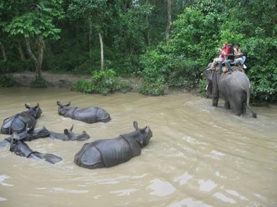 Носорози в националния парк Читван